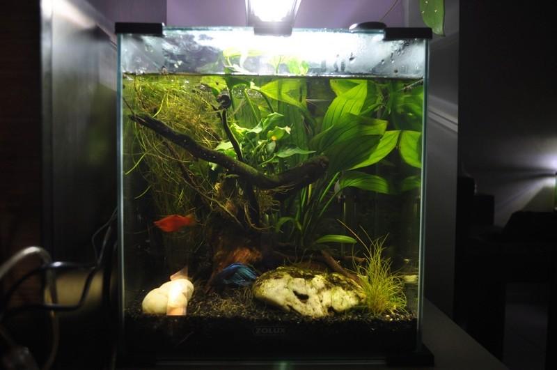 Mes aquariums Dsc_0037