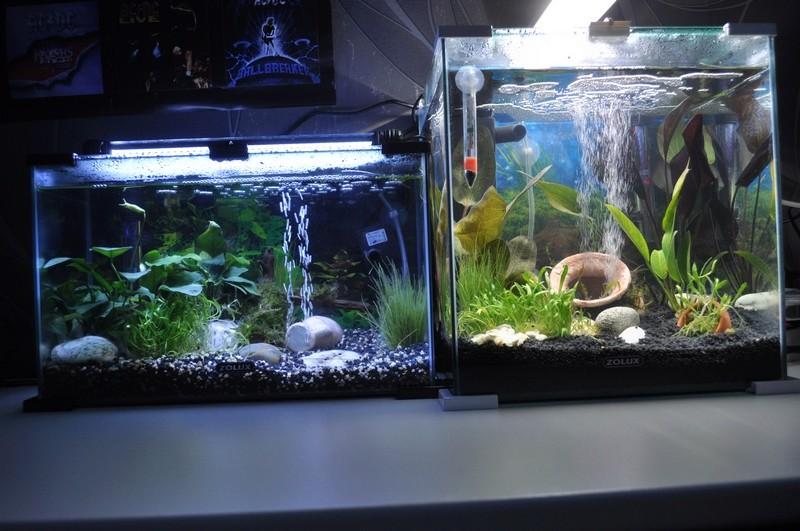 Mes aquariums Dsc_0039