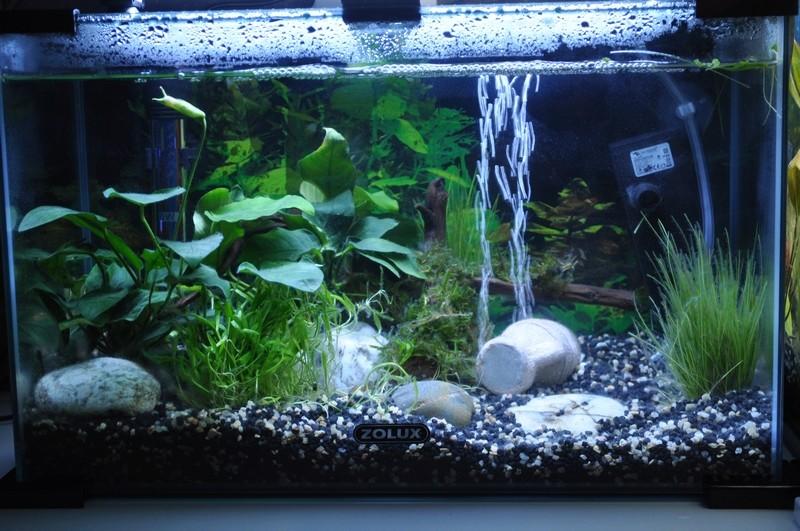 Mes aquariums Dsc_0041
