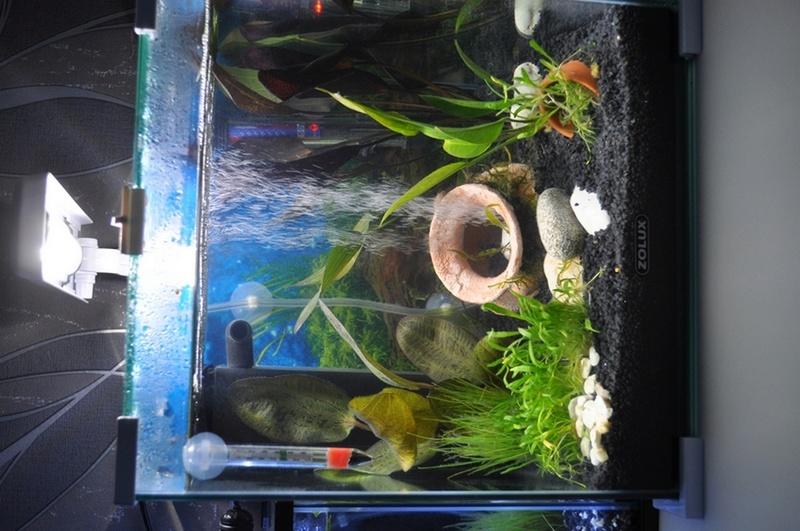 Mes aquariums Dsc_0043