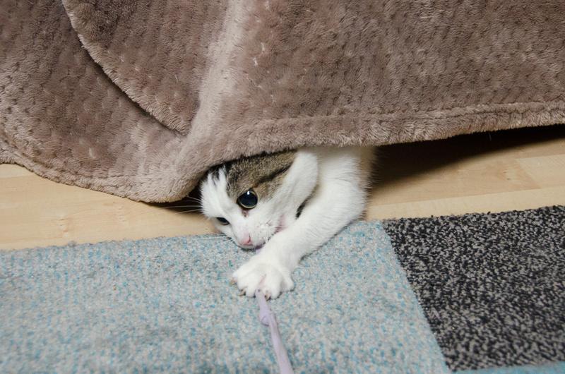 Jorelle, femelle type européen blanche tachetée de noir née le 1 novembre 2014 - Page 9 Jorell20