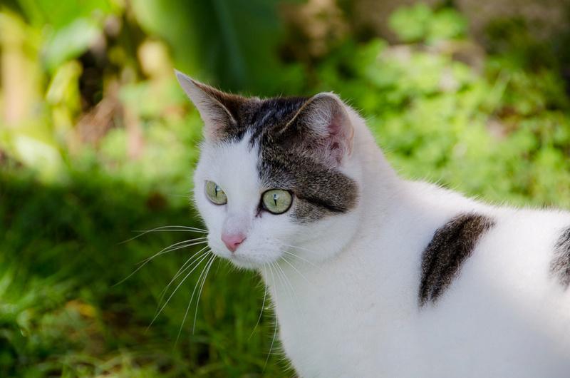 Jorelle, femelle type européen blanche tachetée de noir née le 1 novembre 2014 - Page 9 Jorell24