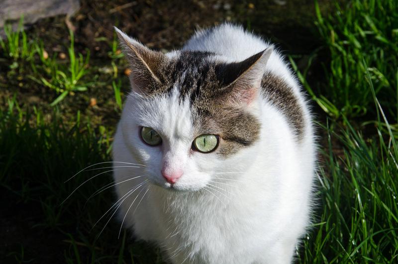 Jorelle, femelle type européen blanche tachetée de noir née le 1 novembre 2014 - Page 9 Jorell27