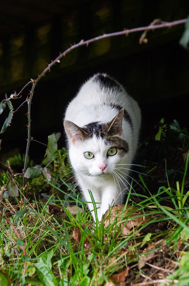 Jorelle, femelle type européen blanche tachetée de noir née le 1 novembre 2014 - Page 9 Jorell28