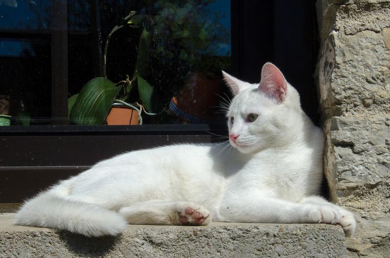 Mitsi, mâle tye européen blanc né le 20 septembre 2017 - Page 3 Mitsi-12