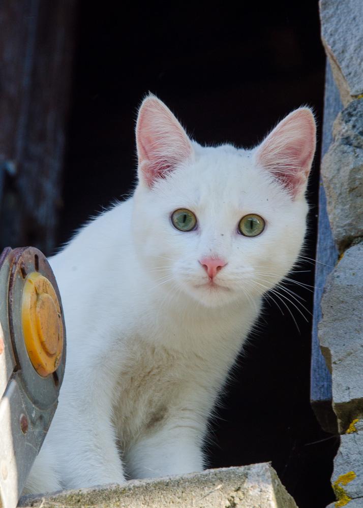 Mitsi, mâle tye européen blanc né le 20 septembre 2017 - Page 3 Mitsi-13