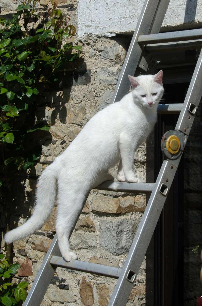 Mitsi, mâle tye européen blanc né le 20 septembre 2017 - Page 3 Mitsi-14