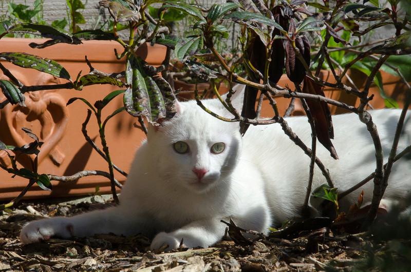 Mitsi, mâle tye européen blanc né le 20 septembre 2017 - Page 3 Mitsi-16