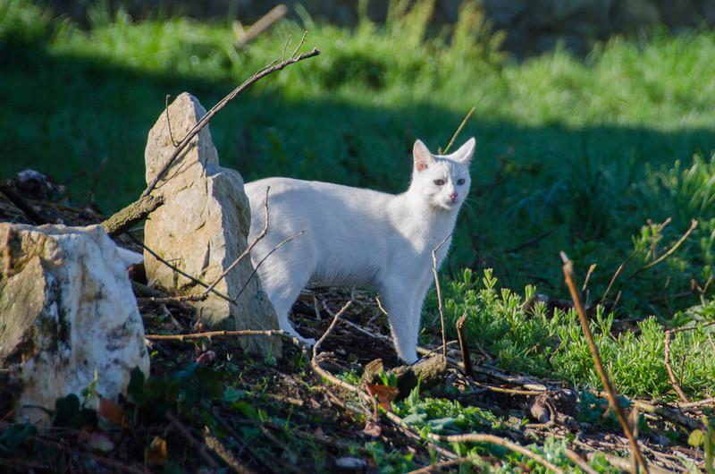 Mitsi, mâle tye européen blanc né le 20 septembre 2017 - Page 3 Mitsi-17