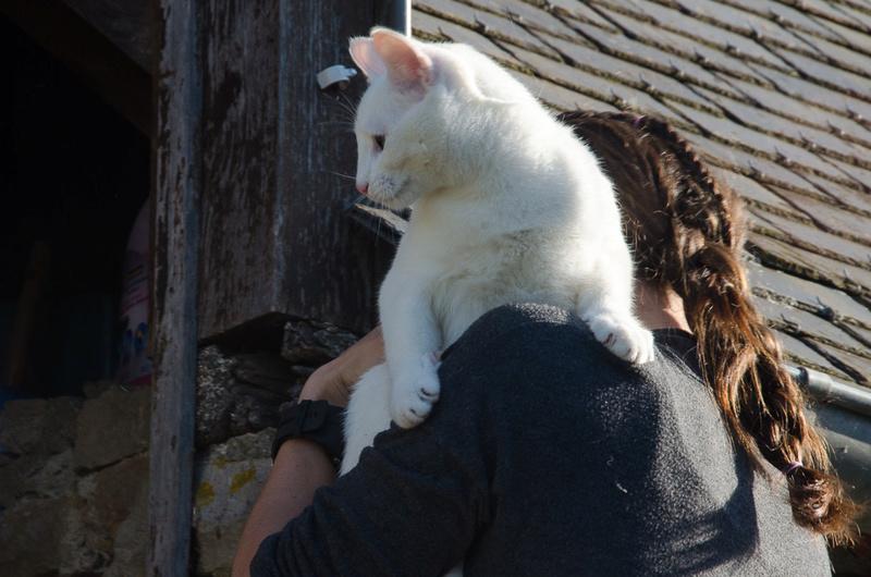 Mitsi, mâle tye européen blanc né le 20 septembre 2017 - Page 3 Mitsi-18