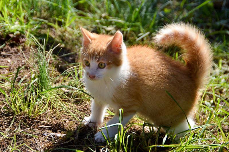 Nesquik, mâle type européen roux et blanc, né début septembre 2017 - Page 2 Nesqui40