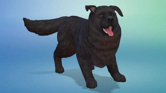 EA SPCAI Donation - Adopt A Virtual Pet This Week! Simgur13