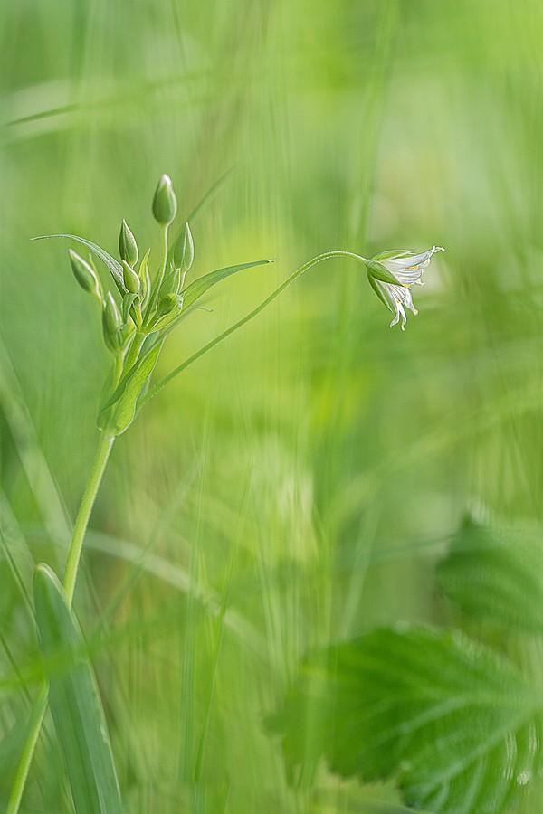 p'tite fleur blanche Dsc08612