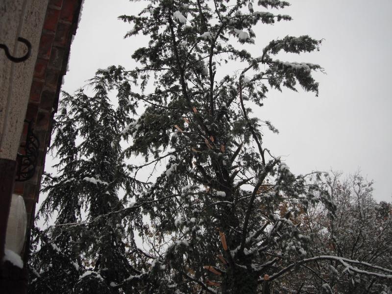 qui est sous la neige  Dscf8016