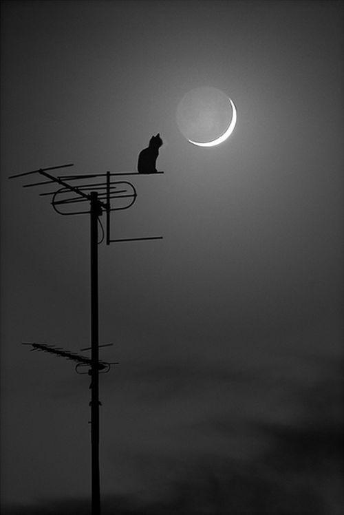 bonzour bonne zournée et bonne nuit notre ti nid za nous - Page 3 41750d10