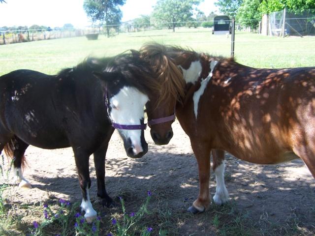 new mare - Sassy Horses16