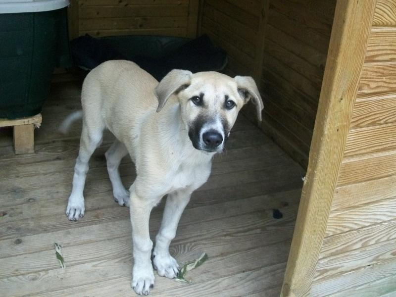 BLAS, El cachorrón que necesita adopción 100_3410