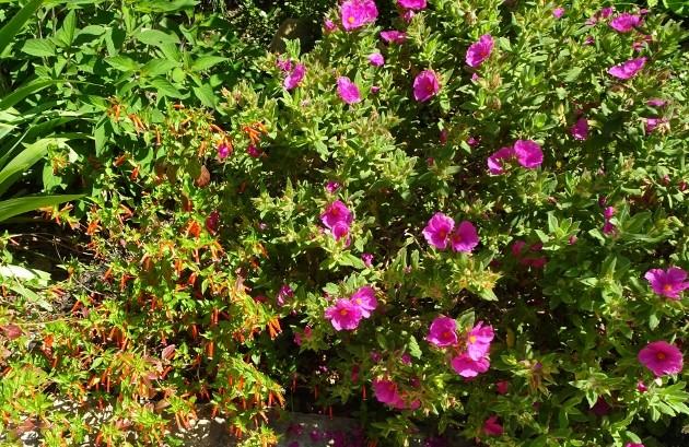 les jardins sont beaux en mai ! - Page 3 001_6311