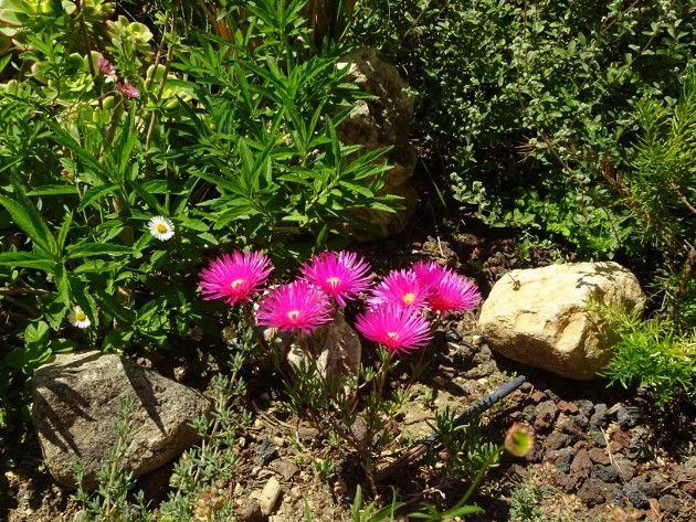 les jardins sont beaux en mai ! - Page 3 007_6316