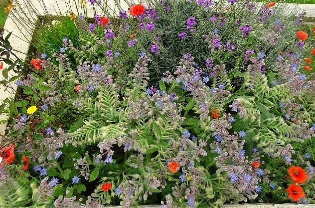 les jardins sont beaux en mai ! - Page 2 011_6315