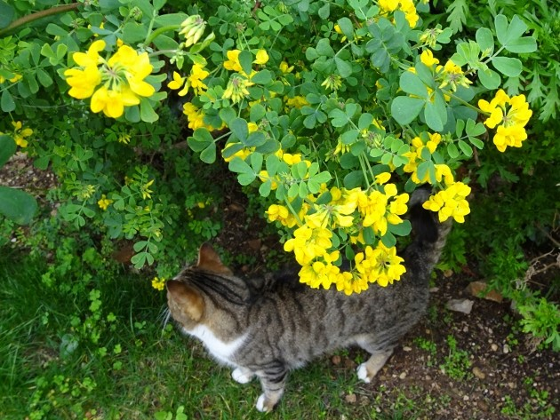 giboulées de fleurs ? - Page 2 015_6312