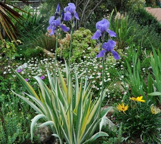 les jardins sont beaux en mai ! 022_5311