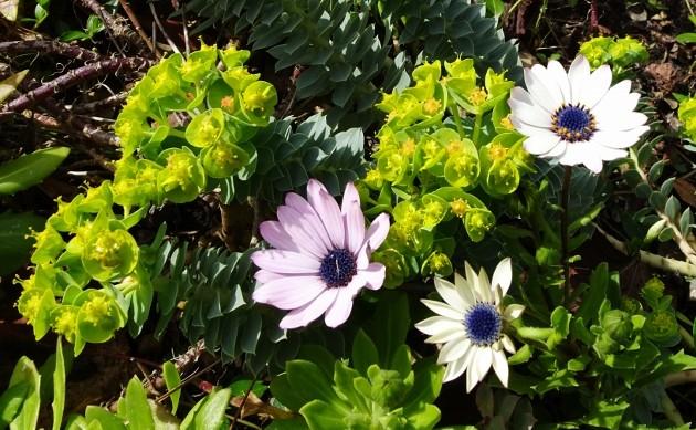 giboulées de fleurs ? - Page 2 022_6311