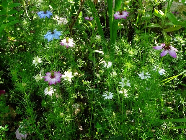 les jardins sont beaux en mai ! - Page 2 026_6312