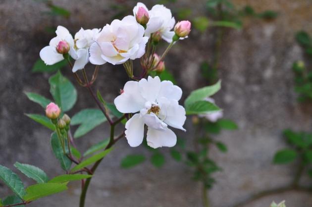 les jardins sont beaux en mai ! - Page 2 035_6310