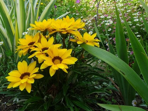 les jardins sont beaux en mai ! - Page 3 036_6310