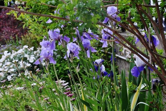 les jardins sont beaux en mai ! 037_6310