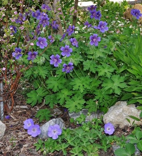les jardins sont beaux en mai ! - Page 2 044_4810