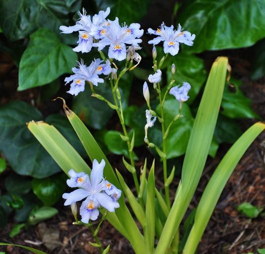 explosion florale - Page 4 047_5310