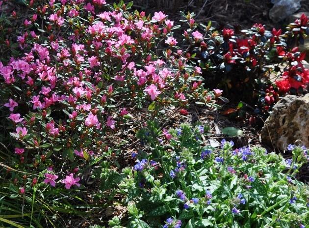 explosion florale - Page 3 087_6310