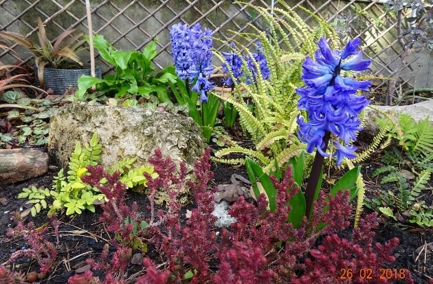 couleurs d'hiver au jardin  - Page 2 297_6310