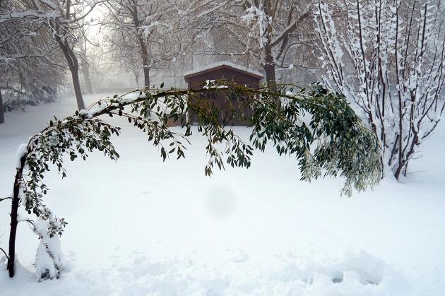 """Concours  """"L'hiver des fous jardiniers""""-Participations 8_janv10"""