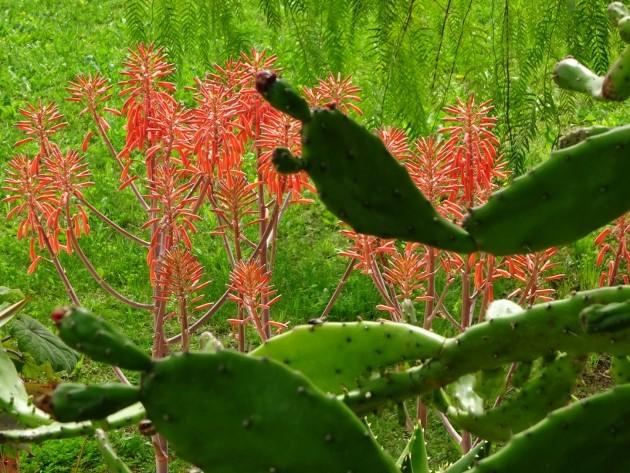 les jardins sont beaux en mai ! Afpca_10