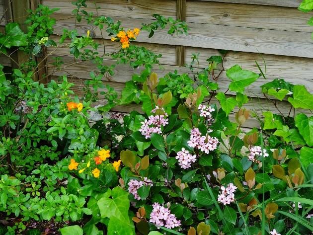 les jardins sont beaux en mai ! Afpca_11
