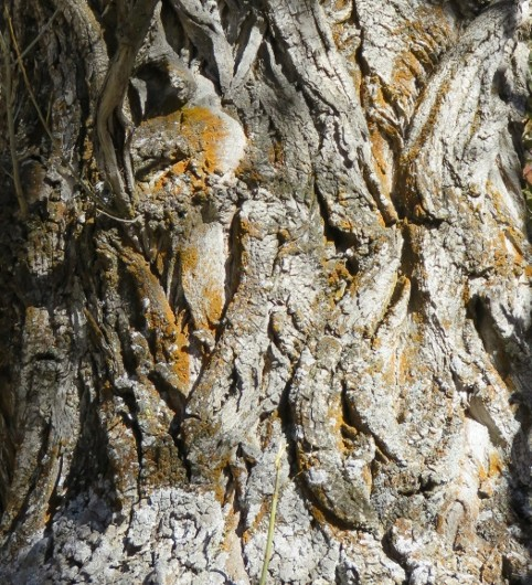 Ecorces d'arbres  - Page 4 Automn10