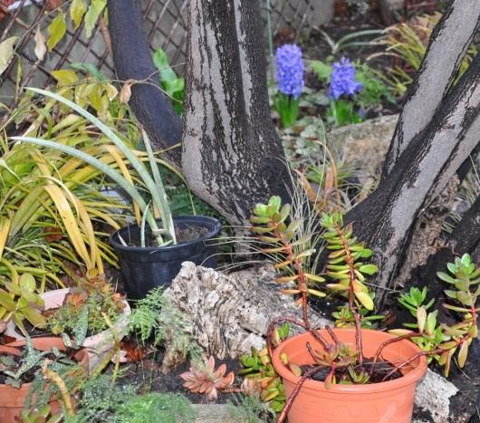 couleurs d'hiver au jardin  - Page 2 Dsc_0817