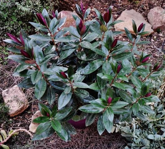 couleurs d'hiver au jardin  - Page 2 Dsc_0818