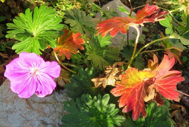 dernières fleurettes de l'année Img_7817