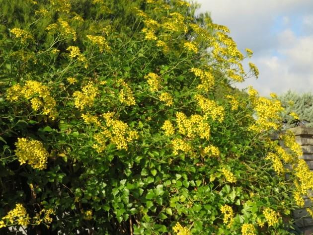 dernières fleurettes de l'année Img_7914