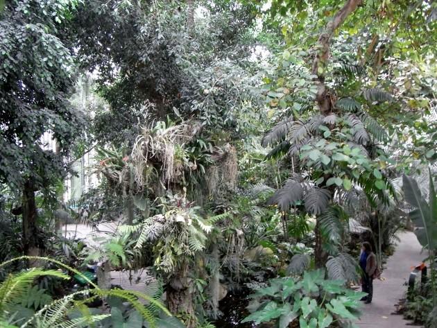 """Déficoncours """"Jardins sous verre"""" - Participations Jardin19"""