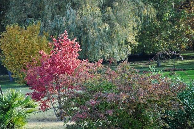 Viburnum opulus - viorne obier Octobr16
