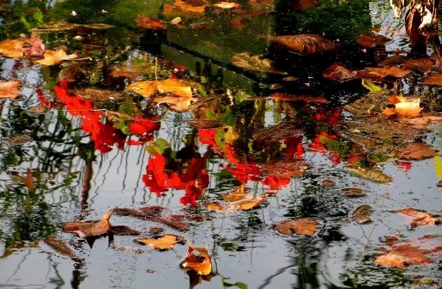 """Déficoncours """"Reflet dans l'eau"""" - participations Octobr17"""