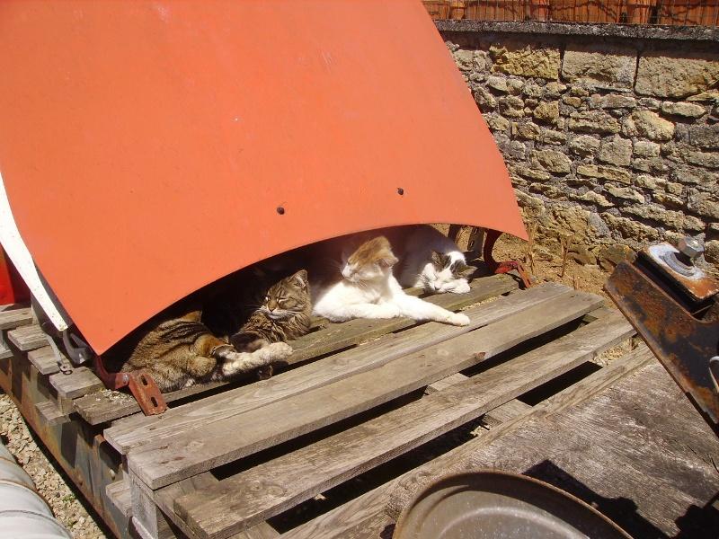 Ce chat me cherche... - Page 4 Loulou10