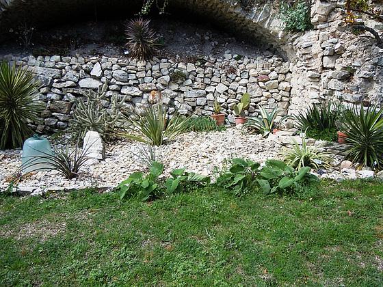 Agave victoriae-reginae - agave de la Reine Victoria 1_15ab10