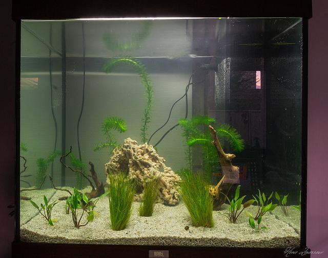 Aquarium 2-9oct10