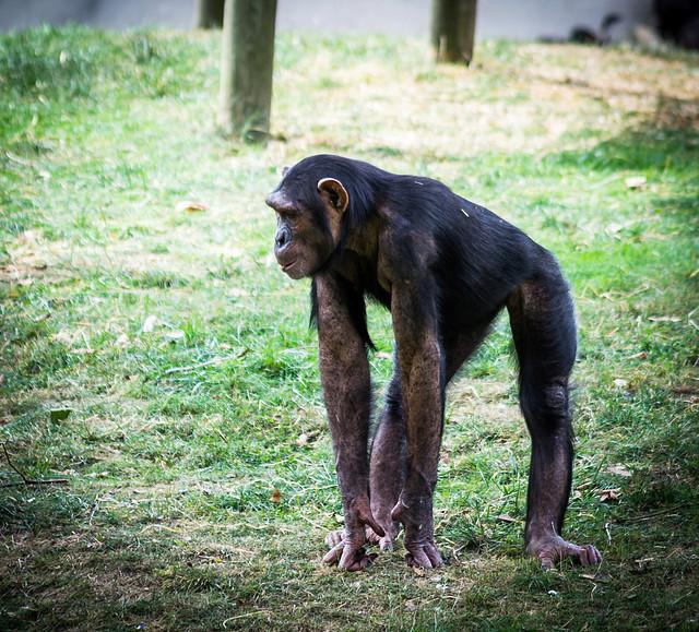 Zoo de Beauval - Page 3 242